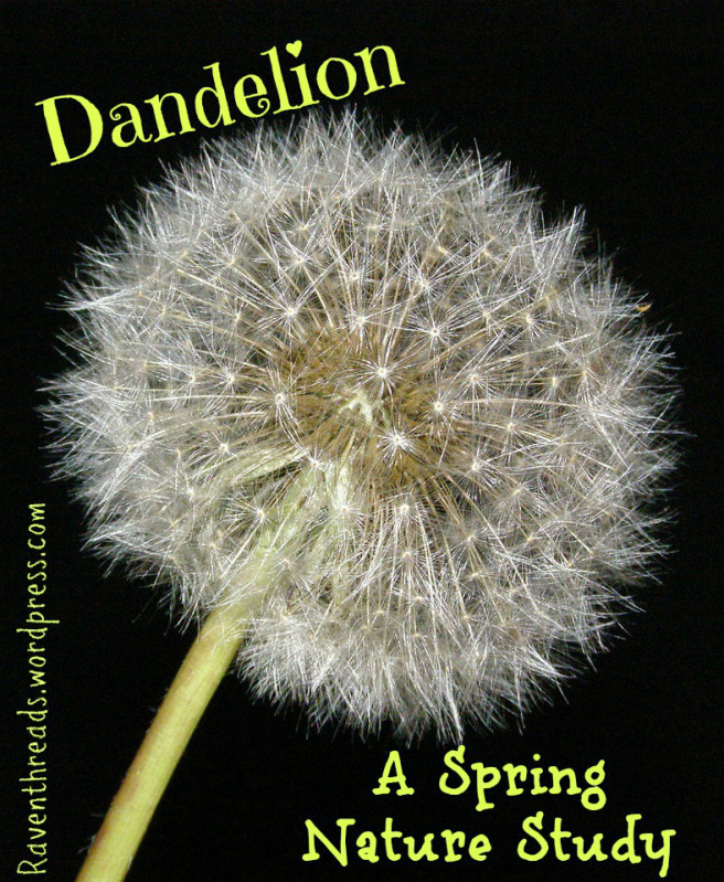 Dandelion A Spring Nature Study