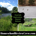 Pond Life Exploration {Homeschool Link UP}