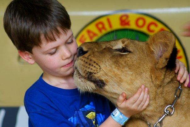 lioncub (2)