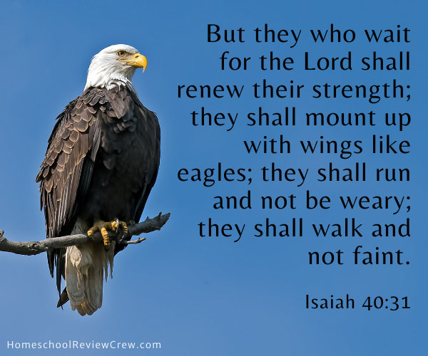 The Wildlife of God's Creation @ HomeschoolReviewCrew.com